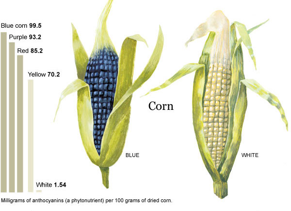http://www.nytimes.com/interactive/2013/05/26/sunday-review/26corn-ch.html?ref=sunday