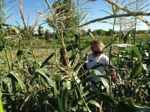 Me working in the cornfield, Taken by Bryant Irawan